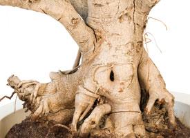 Video umělé stromy