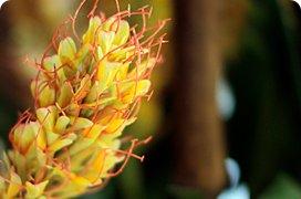 Umělé rostliny květiny