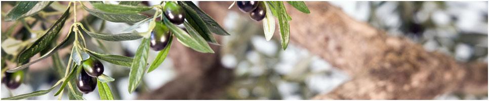 Umělý olivovník